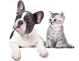 hyperpara veterinaire parapharmacie